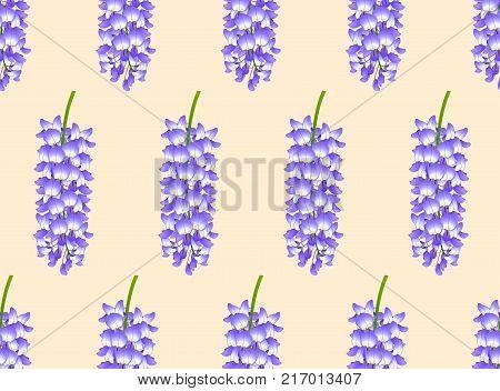 Violet Blue Wisteria on Ivory Beige Background. Vector Illustration.