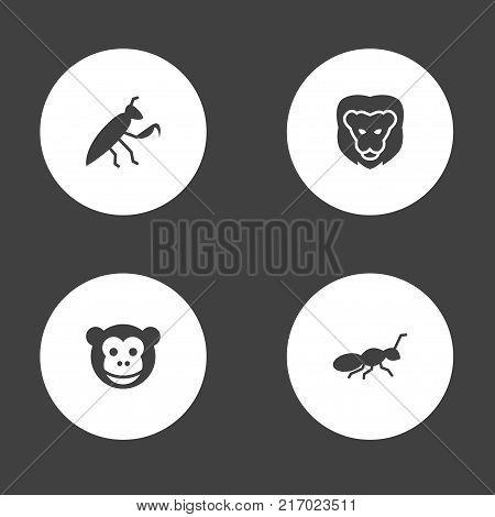 Collection Of Grasshopper, Herculeanus, Wildcat And Other Elements.  Set Of 4 Zoology Icons Set. poster