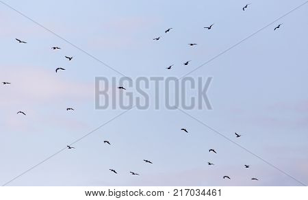 a flock of birds in the sky .