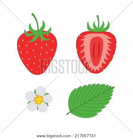 red berry strawberry and a half of strawberry. Set flower, petal, strawberry. Isolated on white background, fruit