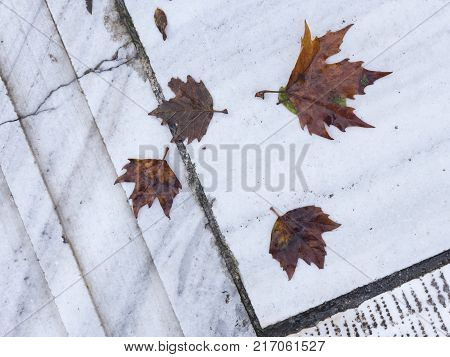 red old wet dirty autumn e leaves on a light gray old marble with spots and cracks in the street