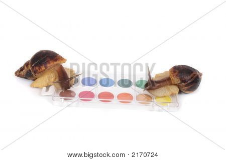 two nice snails on the white backgrouds poster