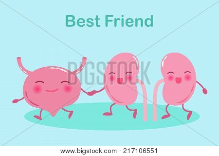 cartoon kidney with bladder on the green background