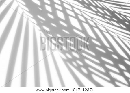 abstract background of shadows palm leaf on a white background. White and Black