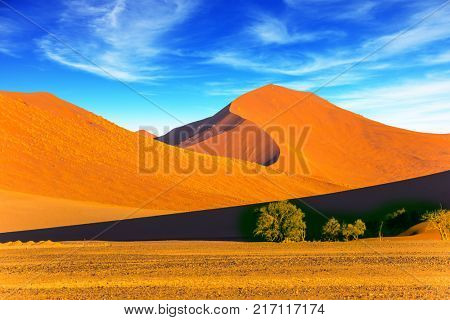 Sunset in the desert. Orange, red and yellow dunes of the Namib desert. The concept of extreme and exotic tourism. Namibia, South Africa