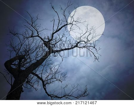 Super full moon and three in the night. Halloween background. Spooky forest with full moon.