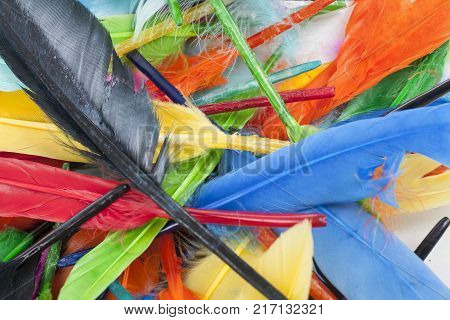 Feathers texture. Beautiful colored vibrant bird feather photo as background. Colorful feather pattern. Rainbow feathers.