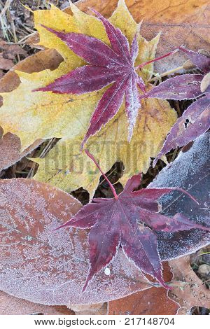 leaves with diamond dust on a meadow