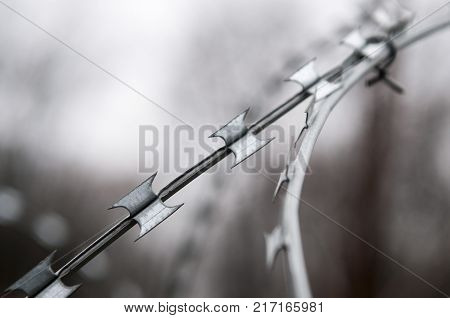 Protective barbed-wire fence on blurred background. Concertina wire or Dannert Wire.