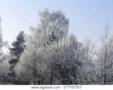 Frosty day - trees covered with rime frost