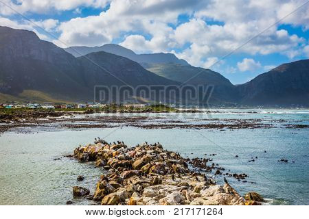 The concept of  ecotourism. African black-white penguins. Big boulders and seaweed on the coast of Atlantic. Boulders Penguin Colony in the Table Mountain National Park, South Africa