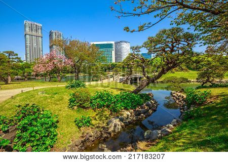 Hamarikyu Gardens, Tokyo, Sumida River, Chuo district, Japan. Oriental japanese garden during Hanami. The Hama Rikyu is in contrast to the skyscrapers of the adjacent Shiodome district.