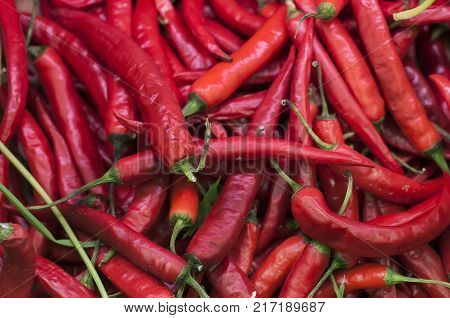 The chili pepper is the fruit of plants from the genus Capsicum, members of the nightshade, Solanaceae, family.