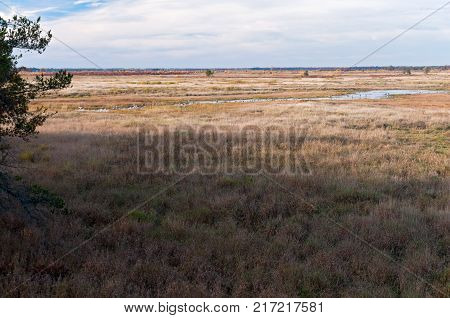 sedge meadow prairie and wetland expanse at necedah wildlife refuge in juneau county wisconsin
