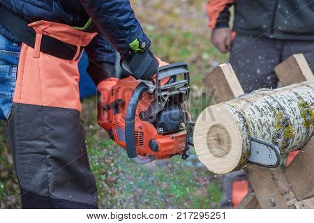 Dangerous work: professional woodcutter in protective overalls saws a log of wood lying on a stand with a chainsaw close-up