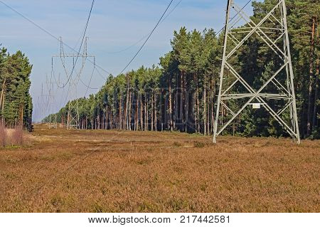 High voltage power line. A row of metal, gray poles of a high voltage power line. Electric wires hang from the pillars. The line runs through a pine forest. High pine trees grow on both sides. Directly under the line is the moorland. Sky is blue.