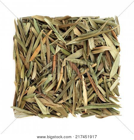 Olive leaf herb used in alternative herbal medicine to benefit cardiovascular and iimmune systems, increases energy and promotes healthy blood pressure on white background. Olea europa.