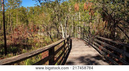 Boardwalk Path At Corkscrew Swamp Sanctuary In Naples