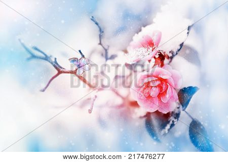 Beautiful pink roses and small bird in the snow and frost on a blue and pink background. Snowing. Artistic winter natural image. Selective and soft focus.