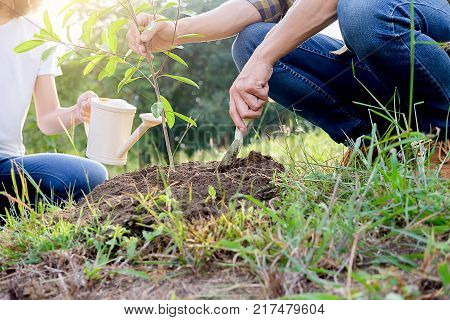 Planting a tree. Close-up on young couple planting the tree then watering the tree. Environment and ecology concept.