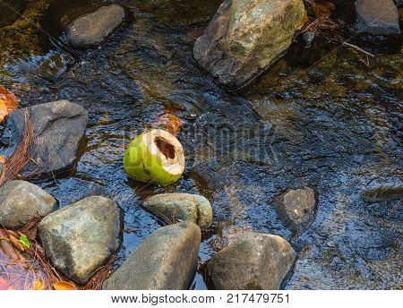 A coconut husk floating in a rocky jungle stream