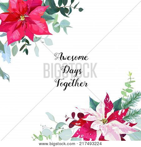 Seasonal angle floral frame with mixed bouquets of red and marbled poinsettia, fir branch, agonis, eucalyptus selection on white background. Vector card. All elements are isolated and editable