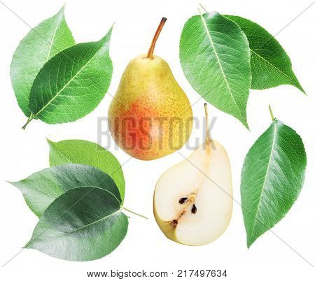 Green pear leaves and pear fruit on white background.