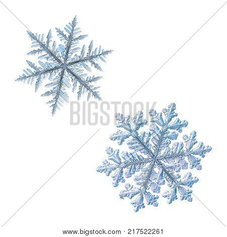 Two snowflakes isolated on white background. Macro photo of real snow crystals: large stellar dendrites with complex, ornate shapes, fine hexagonal symmetry, long, elegant arms and glossy surface. poster