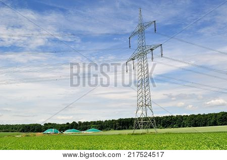 Power line and bio fuel plant behind.