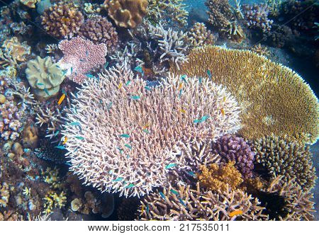 Underwater landscape with coral reef and tropical fish. Pink coral undersea photo. Coral closeup. Sea bottom with coral ecosystem. Tropical seashore snorkeling. Marine relief landscape. Tropic lagoon