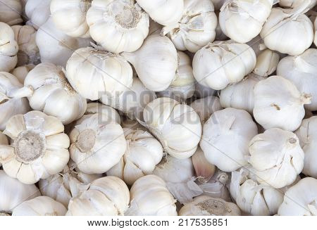 White garlic pile texture. Fresh garlic on market table closeup photo. Vitamin healthy food spice image. Spicy cooking ingredient picture. Pile of white garlic heads. White garlic head heap top view