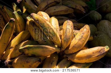 Yellow bananas on local market. Plantains or cooking banana for sell. Yellow ripe banana closeup for recipe or cooking book. Sweet tropical fruit with green flesh. Ripe raw banana bunch in sunlight