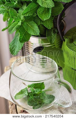 Bunch of Fresh Mint in Tin Can Glass Cup Green Pot on Linen Towel Preparing to Brew Herbal Tea Detox Cleansing Holistic Medicine