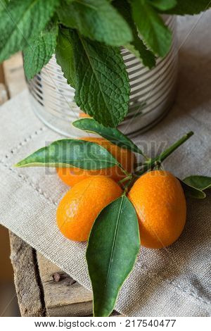 Branch of Ripe Organic Kumquats Green Leaves Bunch of Fresh Mint in Tin Can Jar Linen Towel Rustic Kitchen Interior Holistic Medicine Vitamins
