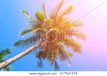 Coco palm tree on blue sky background. Coco palm orange toned photo. Summer vacation travel banner template. Exotic palm leaf ornament. Tropical island nature. Green palm trees in orange sun flare