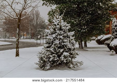 Snow covered trees and falling snow snow winter snow falling