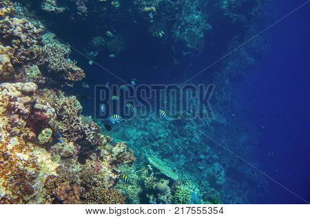 Coral reef wall with tropical fish. Deep undersea landscape. Fauna and flora of tropical shore. Coral reef underwater photo. Diving in tropics. Exotic island seaside vacation. Aquarium banner template