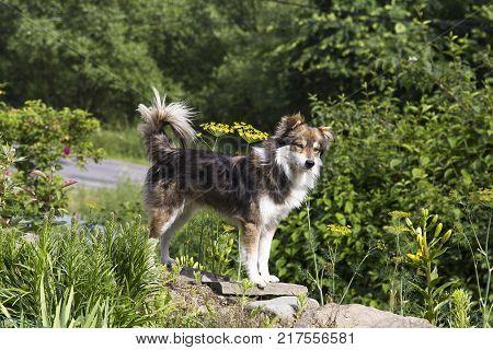 cute furry dog standing in the garden