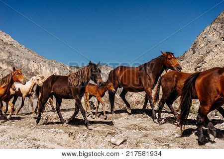 a herd of beautiful graceful brown horses, under a blue sky