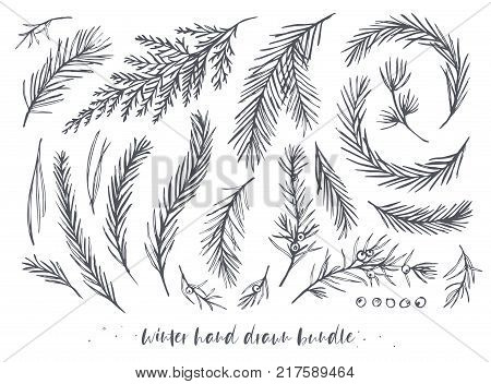 Vector hand drawn elements big set bundle with winter tree pine needles juniper branches with berries red wood blue spruce cedar evergreen leaf. Winter holiday Christmas decorative art objects