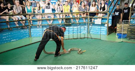 PattayaThailand- November 202017: Show of snakes. Performer play with python during a show in Pattaya Snake Show