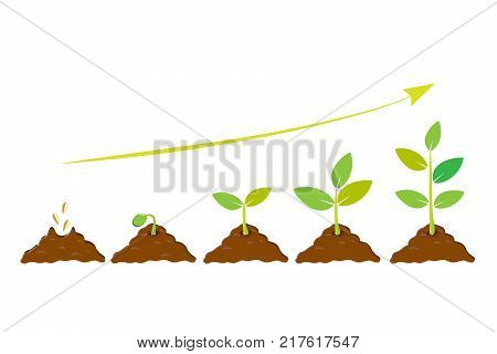 Planting seed sprout in ground. Infographic sequence grow sapling. Seedling gardening tree. Icon flat isolated on white background. Vector illustration