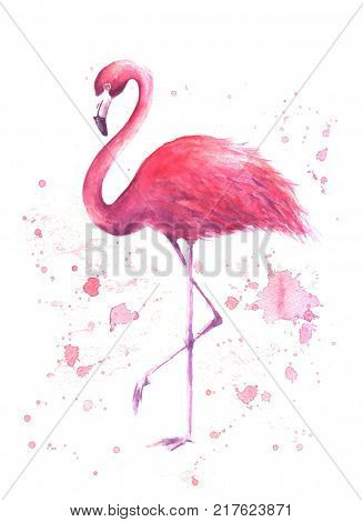 Watercolor Pink Flamingo