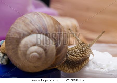 The snail sits on a rejuvenating cream on a background of flowers