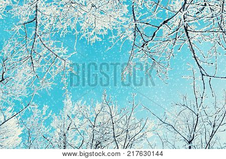 Winter natural view of winter forest treetops covered with frost. Winter background with winter forest trees. Colorful winter forest landscape with snowflakes. Winter forest background