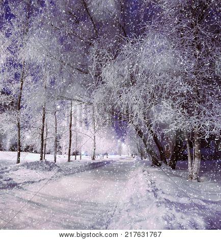 Winter night landscape, winter night scene with frosty winter trees under snowfall. Night winter alley with winter trees covered with frost. Colorful winter night scene, winter landscape under snowfall