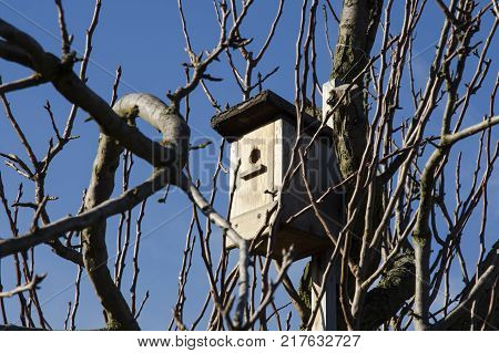 A Birdhouse on a tree between the branches on a bright winter day with a blue sky