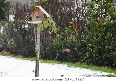 Great spotted woodpecker looks for food at the bird feeder house in winter