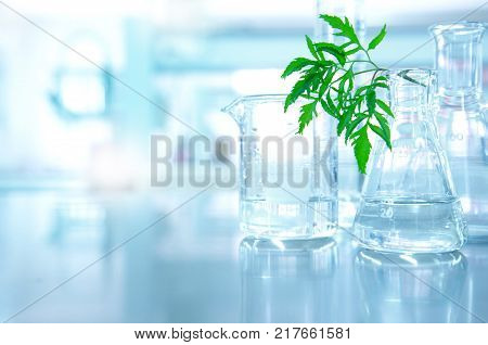beaker and flask with nature green leave in biotechnology science laboratory background