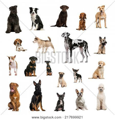 Large collection of dogs, in different position, Isolated on white background.
